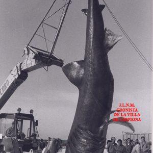 Pescao 001