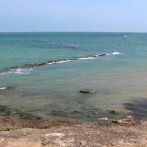 La Junta prohíbe el marisqueo de algunos moluscos en la zona de producción gaditana