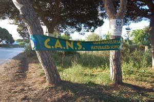 Solucionan  la tala de los pinos centenarios en Chipiona