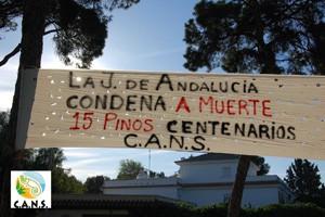 """CANS denuncia que la Junta """"condena a muerte"""" a 15 pinos centenarios."""