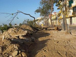 El PP chipionero observa falta de previsión en  el corte de árboles en Avenida de Sanlúcar