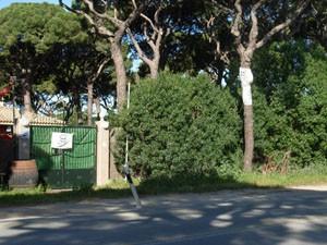 El PP satisfecho por la decisión de la Junta de no talar los pinos centenarios en Chipiona