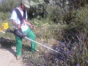 Trabajos de desbroce en el pinar de Chipiona