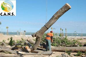 Ecologistas chipioneros piden responsabilidades por el corte de árboles en Avenida de Sanlúcar