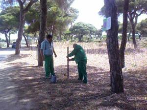 Medio Ambiente asegura que  el pinar está a punto para la  romería