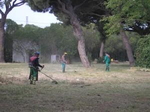 Medio ambiente acondiciona el Pinar para la Romería(Chipiona)