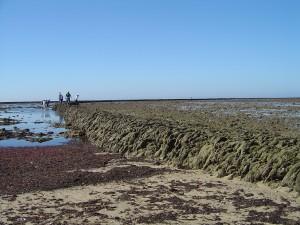 IU afirma que Ecologistas en Acción ha denunciado al Ayuntamiento de Chipiona  ante la Consejería y al Ministerio de Medio Ambiente por verter durante más de 15 años aguas sin depurar