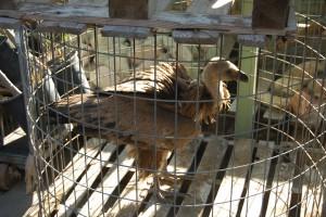 CANS, incansable en la recuperación de especies protegidas