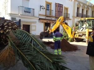 Parques y Jardines trasplanta palmeras de la avenida del Faro a otras zonas de la localidad