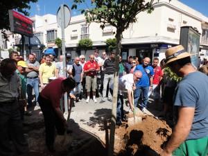 CANS planta un árbol en el lugar de la Plaza de Abastos donde fue talado  otro