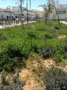 Izquierda Unida de Chipiona  espera una mejora en los  jardines del paseo marítimo de la Cruz del Mar.