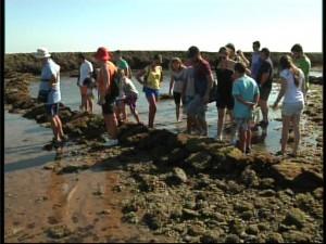 Turismo y JARIFE ofrecen visitas guiadas a los corrales de pesca durante el verano
