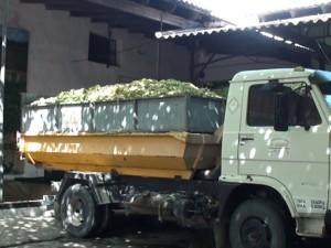 Bodegas César Florido comienza la vendimia 2014