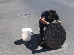 El Ayuntamiento de Chipiona realiza actuaciones específicas antiplagas en Camacho Baños y Diamantino García