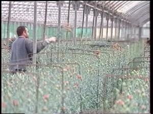 Ayuntamiento de Chipiona y COAG solicitan la ampliación del catálogo de materias activas permitidas en la floricultura