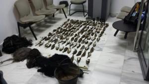 La Guardia Civil detiene a tres vecinos de Chipiona por el montaje de redes y captura ilegal de aves.