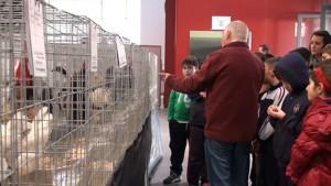 Escolares de Chipiona conocieron el mundo avícola en la primera exposición Costa de la Luz