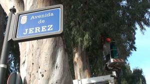 Comienzan trabajos de poda de mantenimiento y saneamiento en los eucaliptos centenarios de la avenida de Jerez