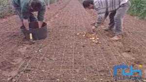 Abierto el plazo para solicitar subvención para jóvenes agricultores que quieran instalar su primera explotación.