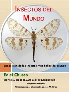 La sala del colectivo Espacio Vacío en el Chusco acoge desde el viernes una exposición sobre los insectos más bellos del mundo