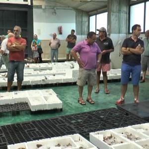 La Organización de Productores Pesqueros Artesanales  explotará  la lonja de Chipiona hasta 2018
