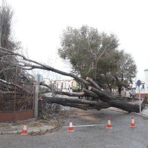 El temporal deja en la localidad árboles caídos y algunos daños materiales, aunque sin demasiada gravedad