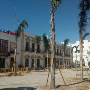 Finaliza la plantación de quince cocos plumosos en la Plaza Juan Carlos I