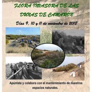 La asociación Eriphia convoca este fin de semana a sus jornadas de erradicación de flora invasora en el cordón dunar de Chipiona