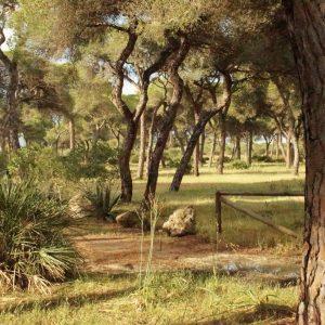 Ciudadanos informa del compromiso de la Consejería de Agricultura para renovar el plan de ordenación del pinar para la próxima década