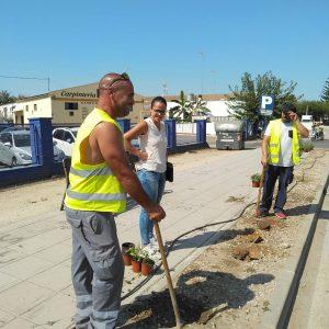 El Ayuntamiento de Chipiona comienza una actuación de mejora de las zonas ajardinadas de la entrada por la carretera de Sanlúcar