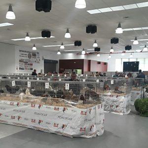 La V Exposición y el IV Concurso de Gallos y Gallinas Sureñas Costa de la Luz contó con la participación de unas 400 aves