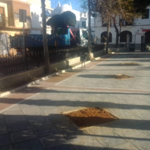 Retirados nueve olivos de la plaza de Andalucía que serán replantados en otros lugares de la población