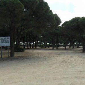 Medio Ambiente y Policía Local de Chipiona solicitan la colaboración ciudadana para localizar a quien está vertiendo veneno en el Pinar