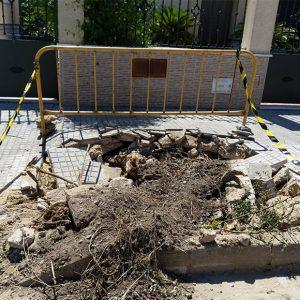Parques y Jardines retira 16 árboles en mal estado en la avenida del Esturión y anuncia la plantación de 40