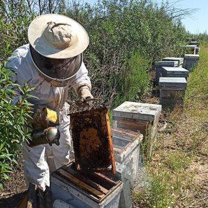 Una agricultora de Chipiona y un apicultor de Villamanrique, en «Campechanos».Fecha de emisión: miércoles 15 de julio, a las 11:30 horas, en Canal Sur Televisión.