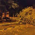 Las fuertes rachas de viento de la tormenta de ayer provocaron desprendimientos de ramas y la caída de una palmera en Chipiona