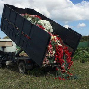 Los agricultores y empresas de flor cortada y planta ornamental de Chipiona ya pueden solicitar las ayudas de la Junta por el covid-19