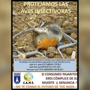 El grupo CANS solicita la colaboración ciudadana para luchar contra la caza ilegal de aves insectívoras