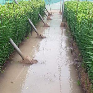 Nuevas inundaciones llevan a la Asociación de Agricultores Costa Noroeste a clamar por soluciones al problema del acuífero