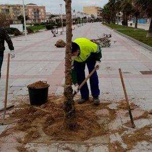 Laura Román aclara que los árboles plantados en el muelle han supuesto coste cero y ocupan alcorques que ya existían