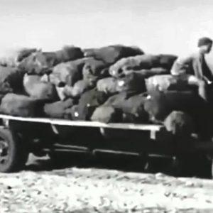 El documental «La guerra olvidada», en Andalucía Televisión