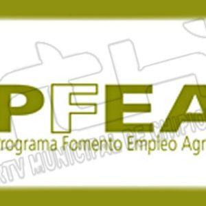 El Programa de Fomento de Empleo Agrario destina a Chipiona 805.410,69 € a proyectos que se desarrollen en el ejercicio 2021-2022