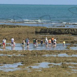 Editado un bando para proteger y preservar los corrales de pesquería de Chipiona en la época estival