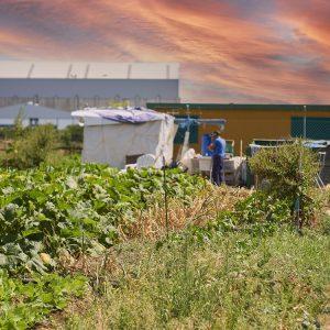 Madre Coraje entrega en tres meses 5.500 kilos de productos de sus huertos a entidades sociales de la provincia de Cádiz